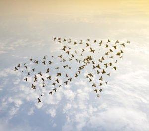 Zugvögel in Pfeilformation
