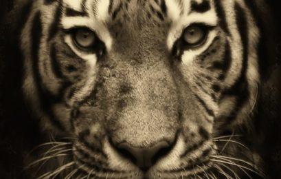 3 Lektionen, die Marketer aus «Tiger King» mitnehmen sollten